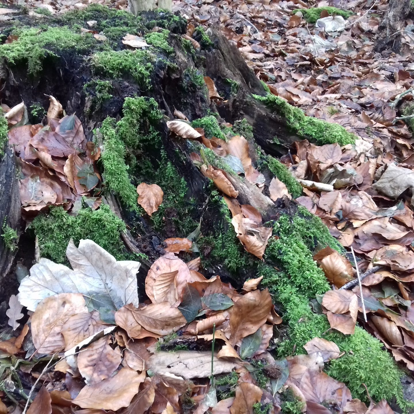 mosses and treetrunks